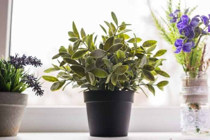 Move Tender Plants Indoors