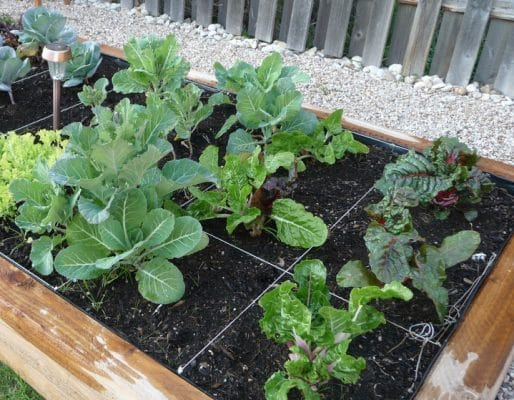 Tips on Planting Your Winter Vegetable Garden