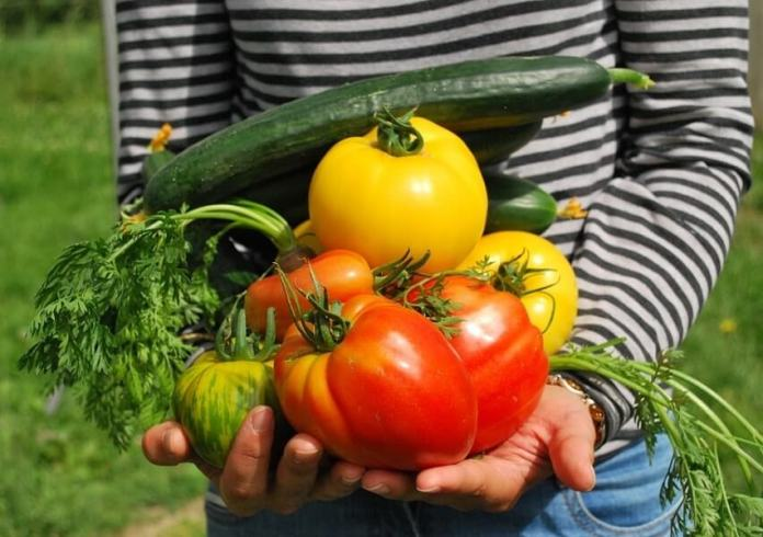 How to Choose and Star Easy Vegetable Garden