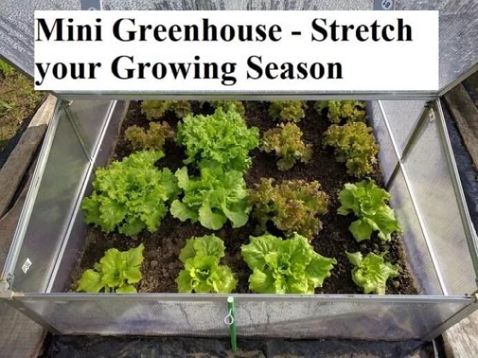 Mini Greenhouse - Stretch your Growing Season