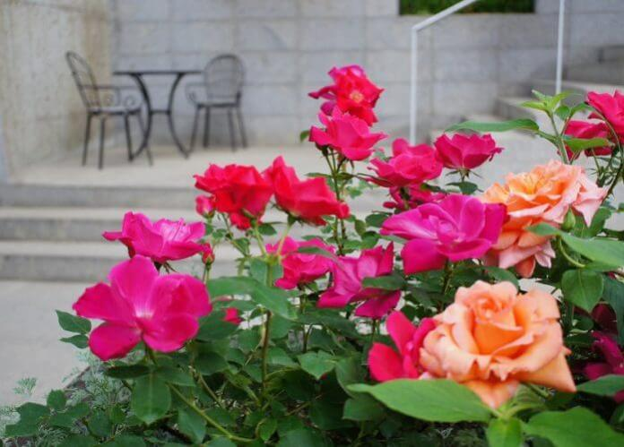 Designing your Rose Garden