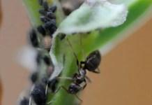Ants - Six-Legged Gardeners