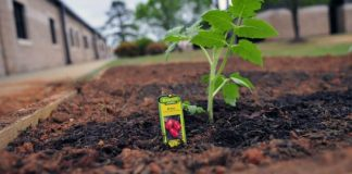 Best Ways to Planting Vegetables