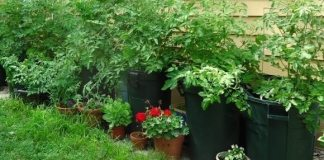 Simple Tasks to Rejuvenate Landscape and Containerized Plants