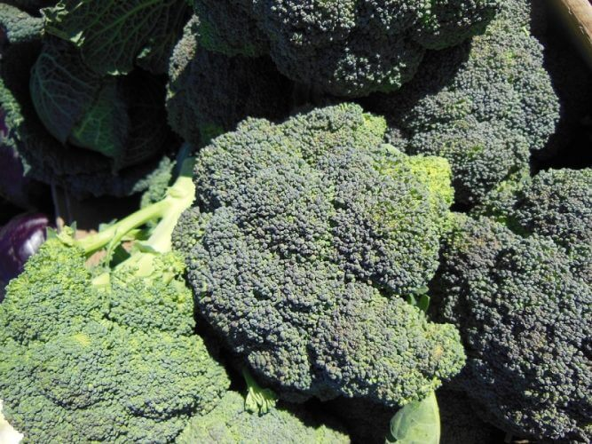 How to Grow Broccoli in your Home Garden