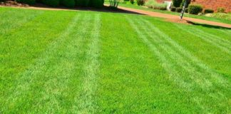 Are Lawns Green or Not