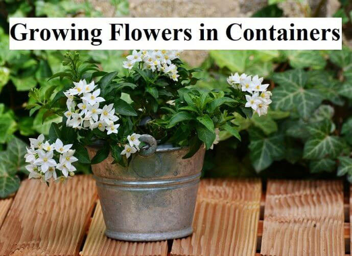 Growing Flowers in Containers