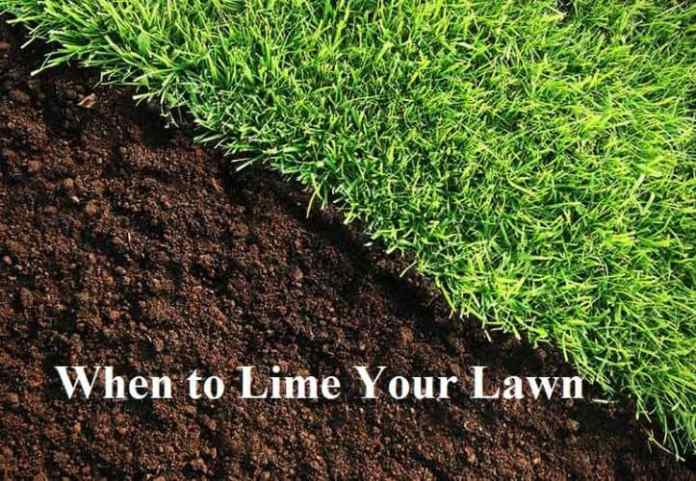 When to Lime Your Lawn