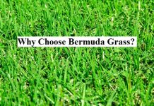 Why Choose Bermuda Grass?