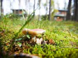 All About Mushrooms in Yard