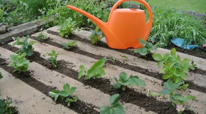 6 Time Saving Tips For Gardening Home