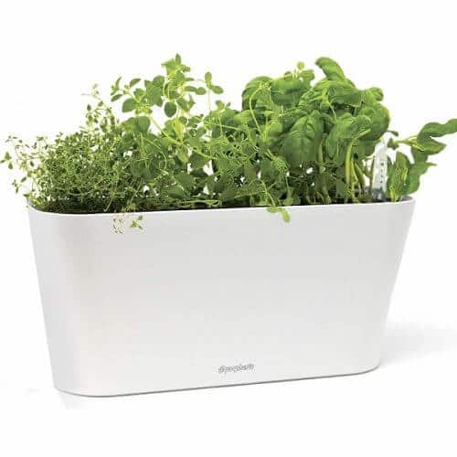 An Indoor Herb Garden Kit