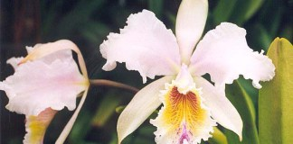 Top 04 Types of Orchids - Indoor Planting and Caring