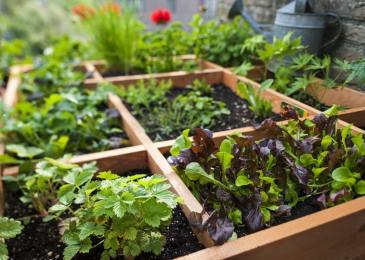 07 Steps to Build a Square-Foot Garden