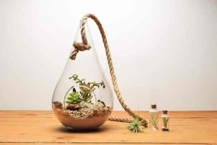 05 Steps to Create Terrarium Project for Kids