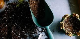 The Organic Way to Fertilize your Garden