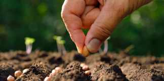 How to Growing Plants from Seed