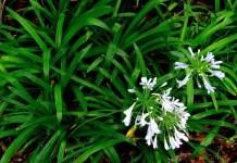 THE BENEFITS OF MONDO GRASS