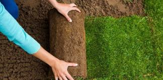 Organic Turf Management Areas