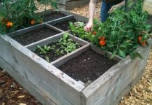 07 Seven Steps to a Potager Plot