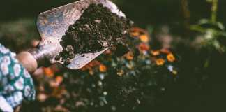 Best Tips to Improve Soil Quality for Better Gardens