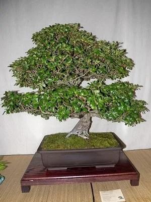 Growing a Bonsai