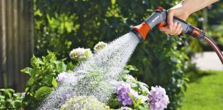How to Watering Plants of Garden