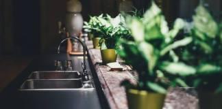 Light for House Plants