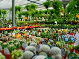 WholesaleNurseries How to Start Up Your Own Nursery Plants