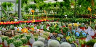 Wholesale Nurseries How to Start Up Your Own  Nursery Plants