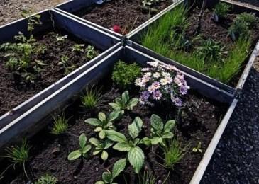 Create a Raised Bed Garden