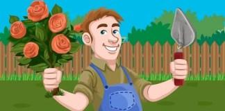 Gardening Tips for Low Maintenance Garden