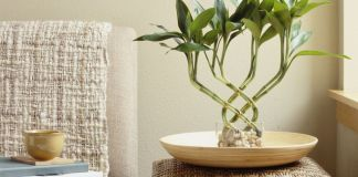 How to Grow Indoor Bamboo House