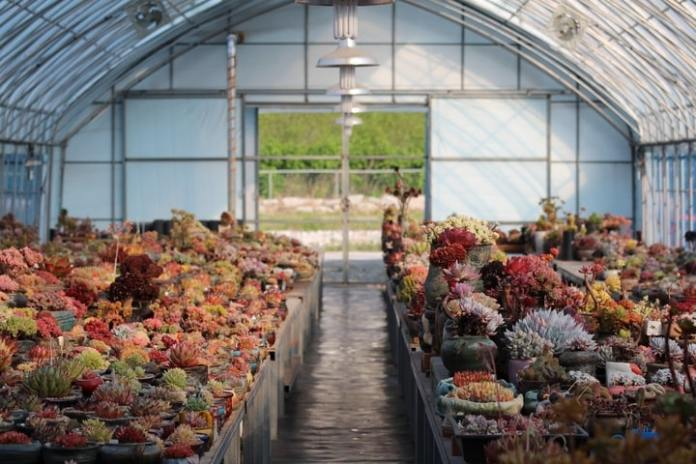 How to Use a Greenhouse For Buigenner