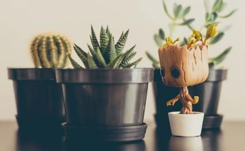 Most Different Types of Cactus Houseplants