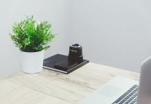 Get Stylish Office Plants With Stylish Containers