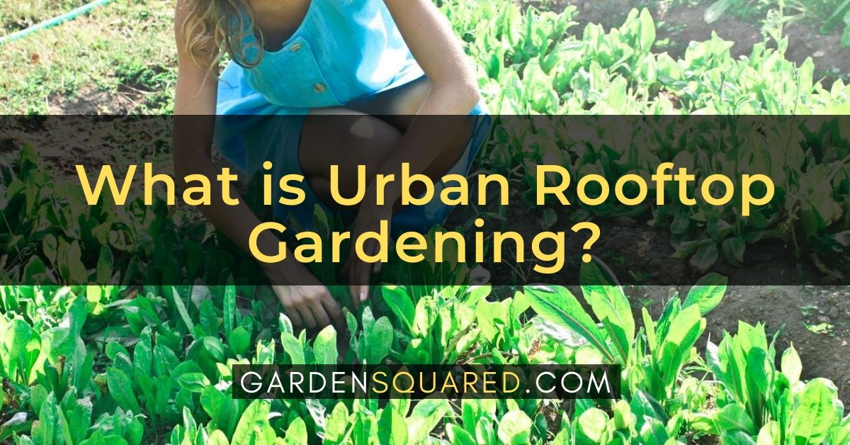 What Is Urban Rooftop Gardening