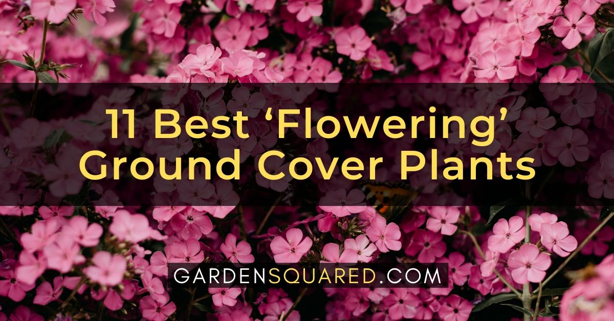 Best Flowering Ground Cover Plants