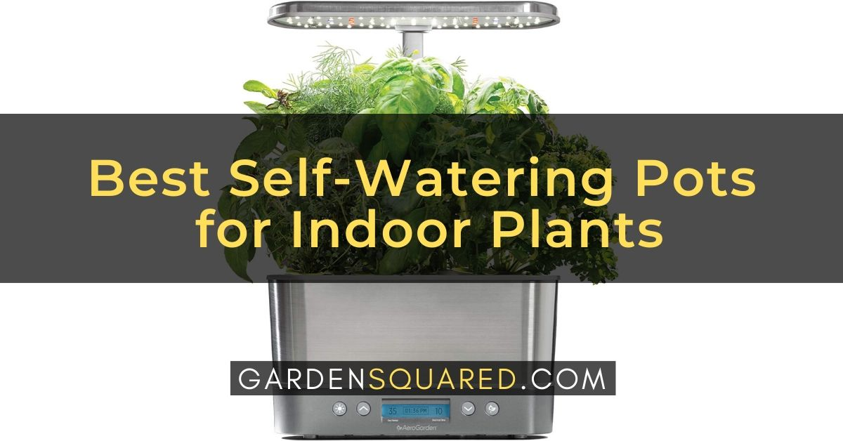 Self Watering Pots Indoor Plants Reviews