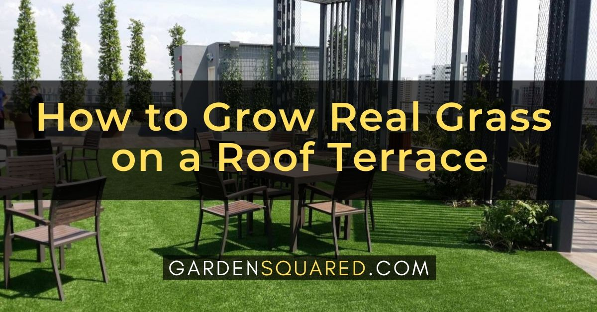 How To Grow Real Grass On A Roof Terrace