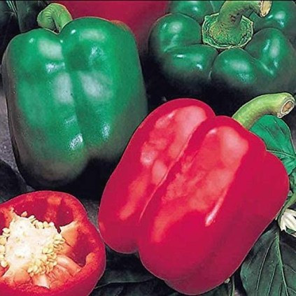 How to  plant bell boy pepper in container