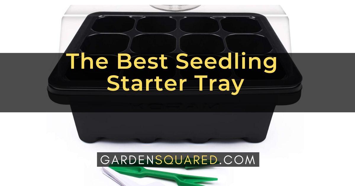 Best Seedling Starter Tray
