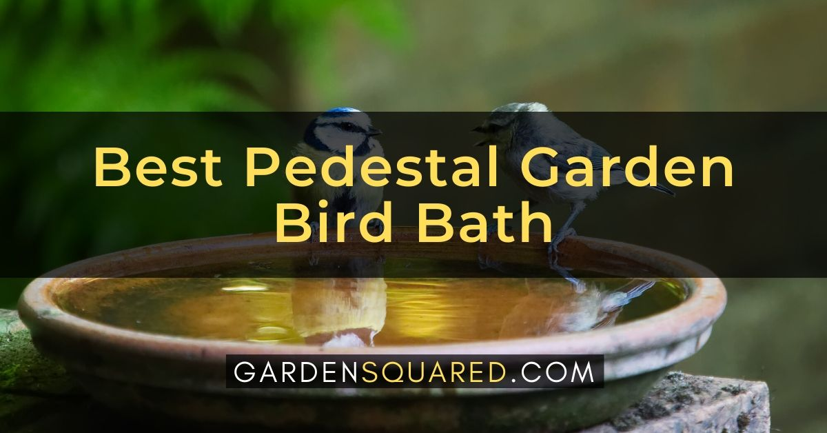 Pedestal Garden Bird Bath Review