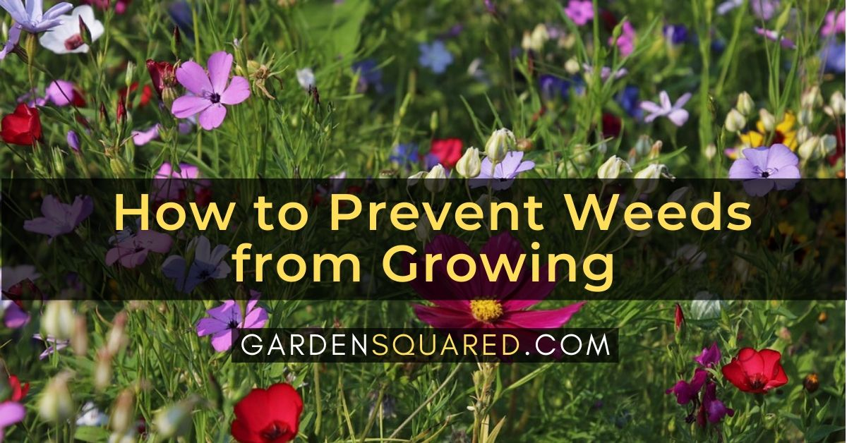 How to Prevent Weeds from Growing