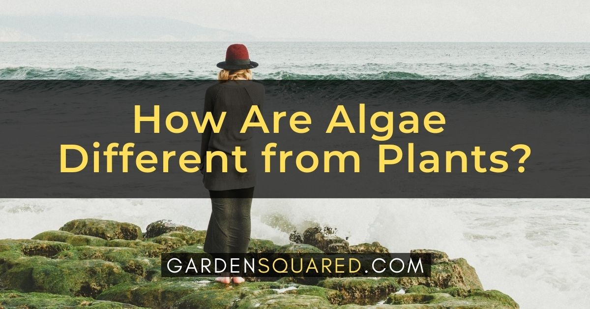 How Are Algae Different From Plants