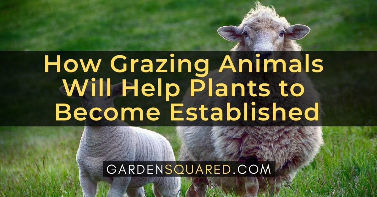 How Grazing Animals Will Help Plants To Become Established