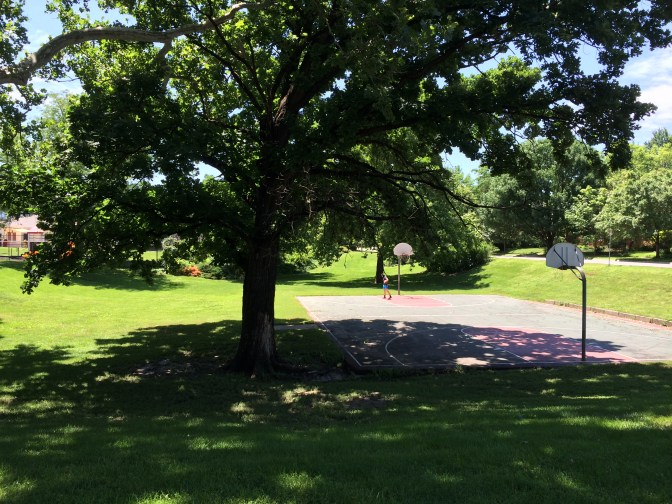 shade froma big tree in a lawn