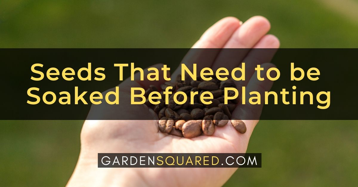 Seeds That Need To Be Soaked Before Planting