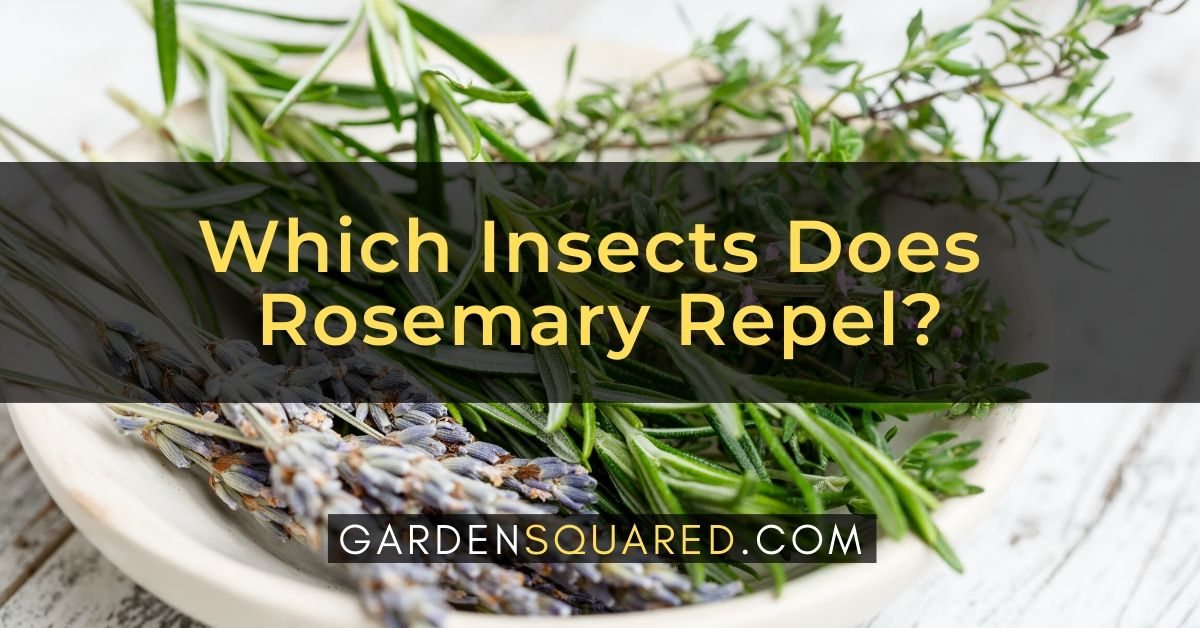 Which Insects Does Rosemary Repel