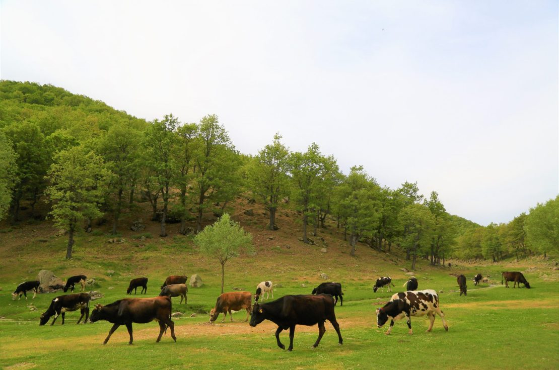 animals grazing on a grassland